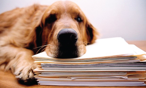 dog paperwork